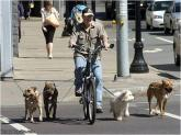 Bike Dog Walker